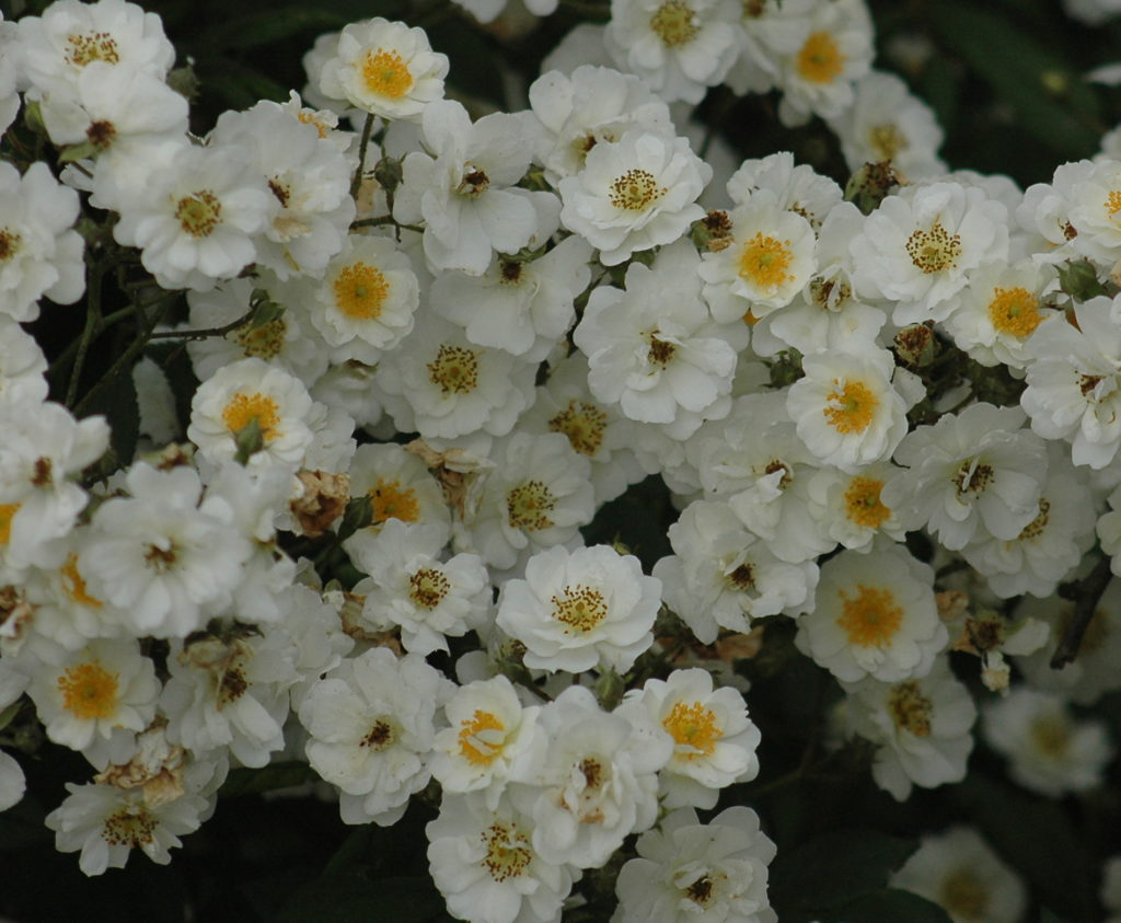 'Rambling Rector'